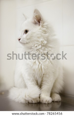 white cat on vets table - stock photo