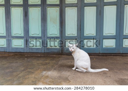 White cat on walking path street.