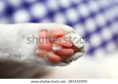 White cat paw close up - stock photo