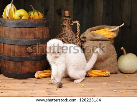 White cat playing on the table - stock photo