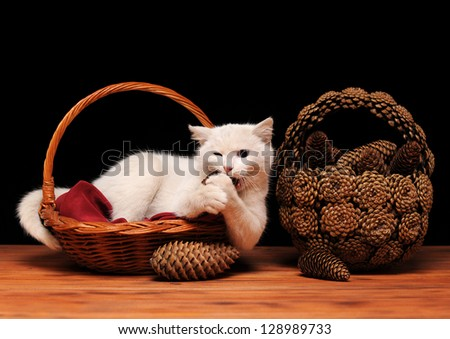 White cat playing with cones