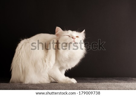 White cat scratching  - stock photo