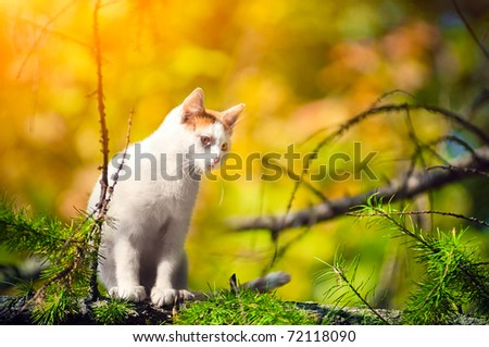 White cat sits high on a tree in the morning - stock photo