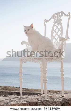 White cat sitting on a beautiful chair against a background of the sea. - stock photo