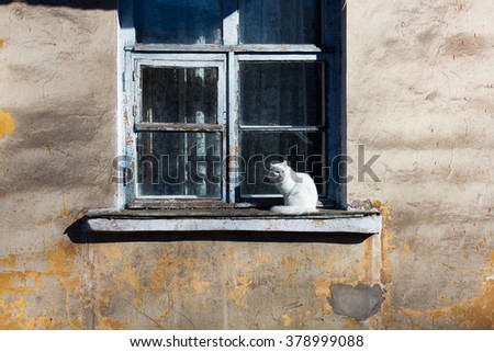 White cat sitting on an old window  - stock photo