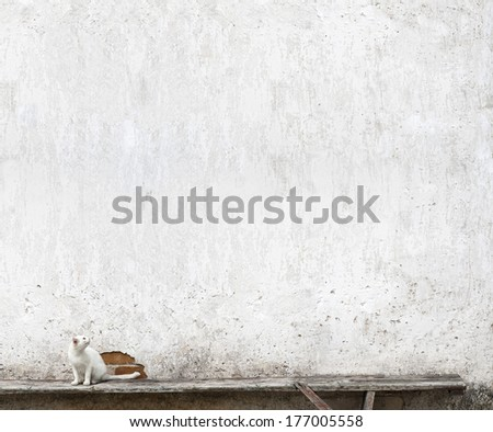 white cat sitting on the bench near the wall, looking at something - stock photo