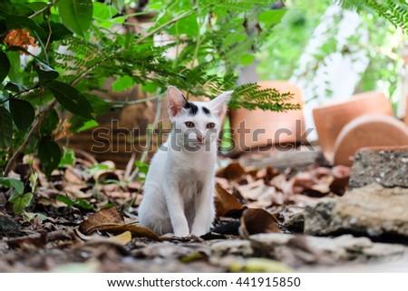white cat sitting on the floor  - stock photo