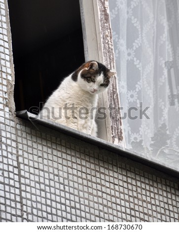 White cat sitting on the window sill and looking down of the window. - stock photo