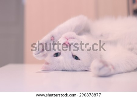 White cat,sleep on table
