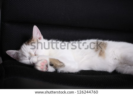 White cat sleeping on chair