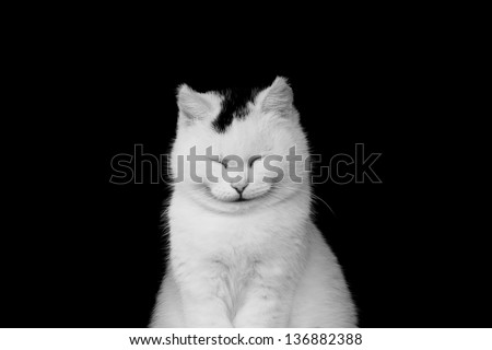 White cat smiling - stock photo