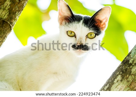 white cat stare  on tree - stock photo