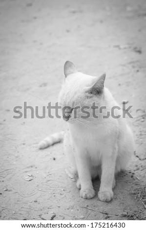 white cat thinking with closed eyes  - stock photo