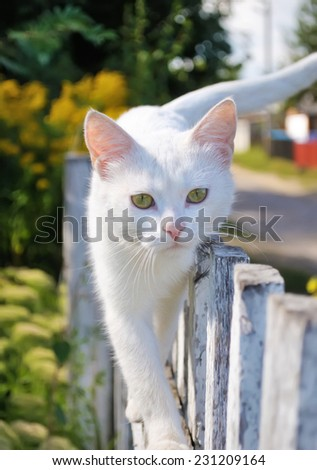 white cat walking - stock photo