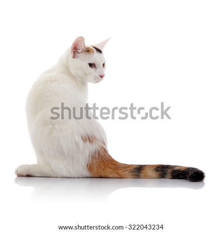 White cat with a multi-colored striped tail on a white background.