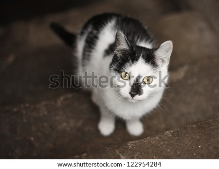 White cat with black patches - stock photo