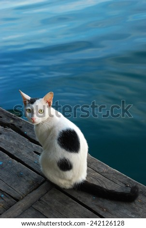 white cat with black spot turns back its head next to a river - stock photo