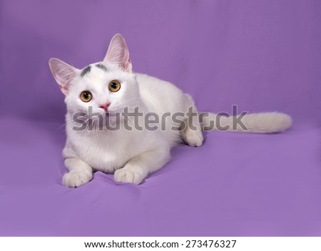 White cat with gray spots lies on lilac background