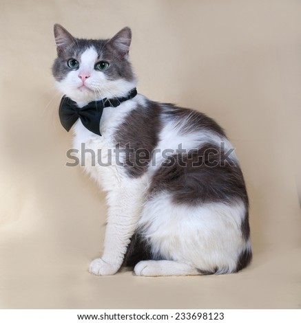 White cat with spots in bow tie sitting on yellow background