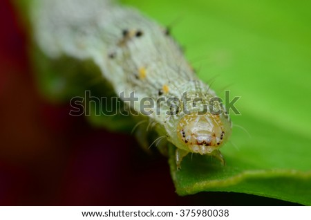 white caterpillar on green leaf