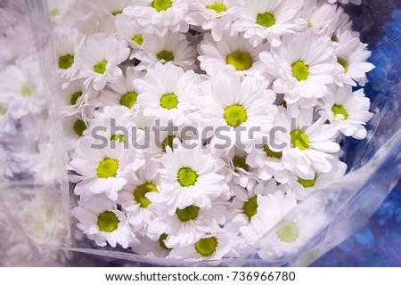 White chrysanthemums flower shop bouquet chrysanthemums stock photo white chrysanthemums in a flower shop a bouquet of chrysanthemums chrysanthemum flower white mightylinksfo