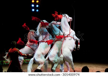 White circus horses on black background - stock photo