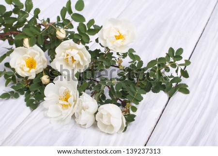 White climbing rose on a wooden table