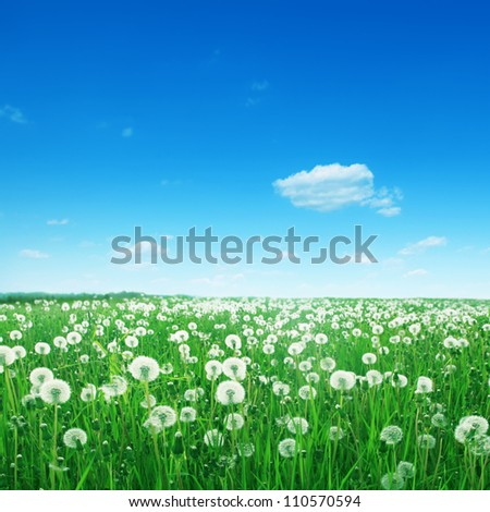 White cloud in blue sky and dandelion field. - stock photo