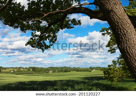 white clouds over green land.