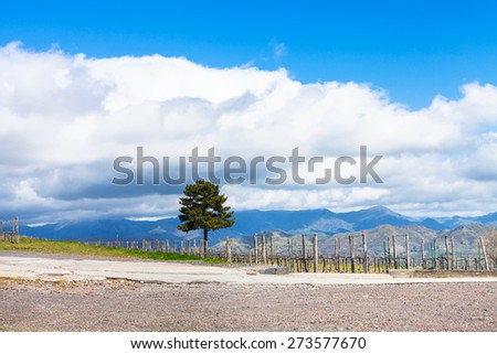 white clouds over vineyard in Etna agricultural region in spring, Sicily, Italy