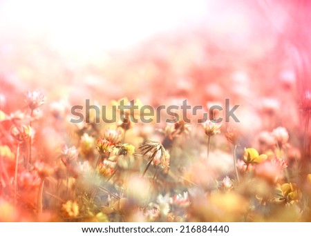 White clover and little yellow flowers in meadow - stock photo