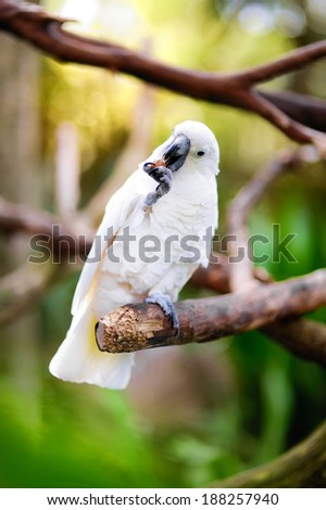White cockatoo parrot sitting on a branch - stock photo