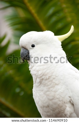 White Cockatoo posing in front of tropical palm trees - stock photo