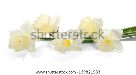 White colored daffodil flowers isolated on white