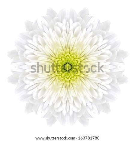 White Concentric Chrysanthemum Flower Isolated on Plain Background. Kaleidoscopic Mandala Design - stock photo