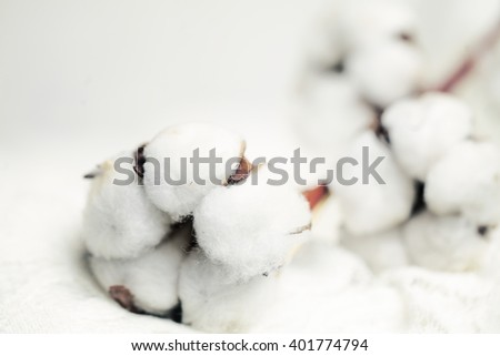 White Cotton Flower on Background with Copy space - stock photo