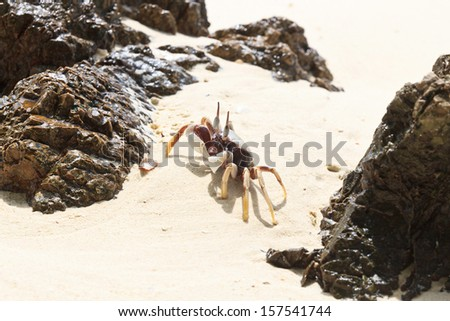 White crab on the beach, Krabi in Thailand - stock photo