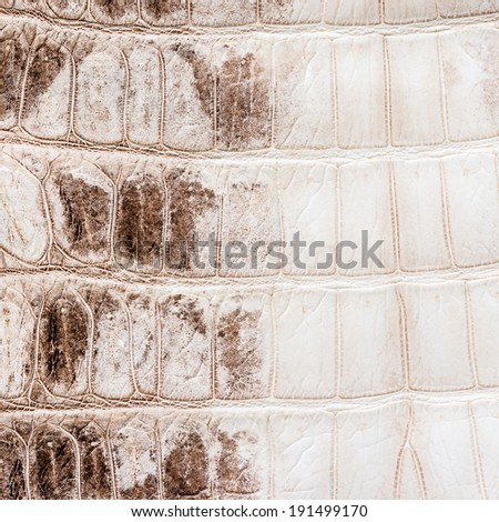 white crocodile leather texture  background - stock photo