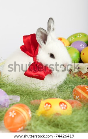 White cute bunny with a red bow on his neck, sitting on grass, surrounded by beautiful multi colored painted Easter eggs:  orange, yellow, purple, green. High resolution studio image.