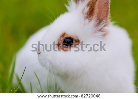 White cute rabbit on green background, close-up view