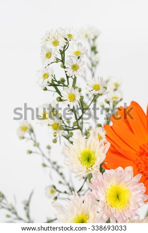 White cutter flower, Name of Science Aster sp.White Background
