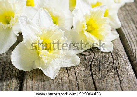 white daffodil flowers on old wood table background