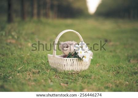 White daisies and teddy bear in basket on the grass. - stock photo