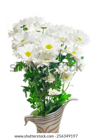 White daisies isolated on white background