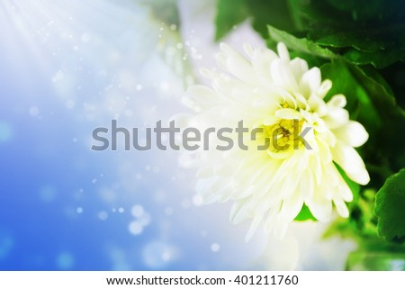 White daisies on blue sky background - stock photo