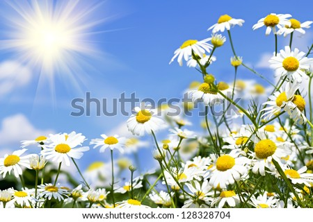 white daisies on blue sky with clouds - stock photo