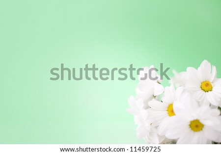 White daisy flowers on the green background