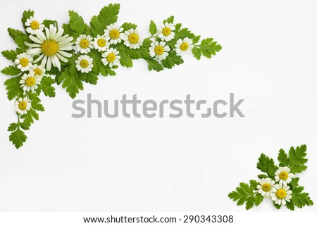 White daisy frame with empty space, chamomile flower, romance card design, beautiful summer background - stock photo