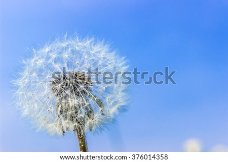 white dandelion on a background of blue sky - stock photo