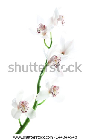 white delicate orchid on white background - stock photo
